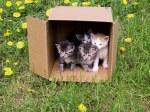 Kittens%25205-08%2520001